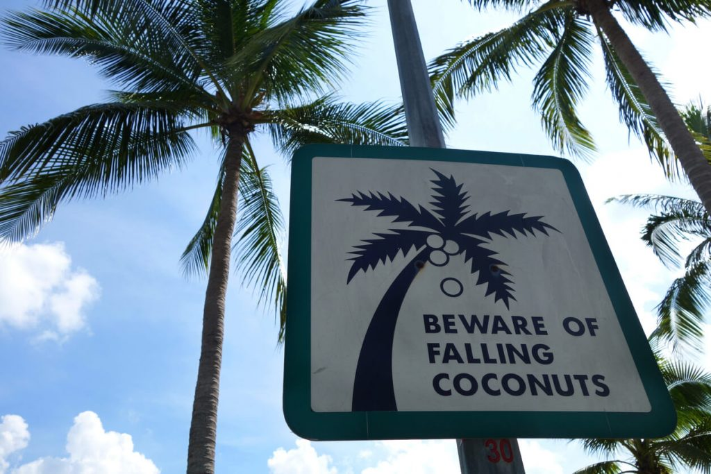 Signpost warning about falling coconuts for traveller safety