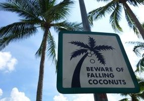 A photo of a sign that says 'beware of falling coconuts'.
